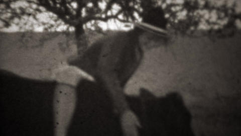 1946: Teenager attempts to ride a domestic farm cow like a horse Footage