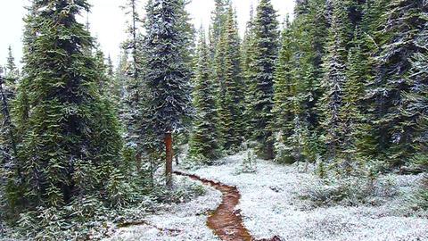 Early Snowfall Jasper National Park Footage