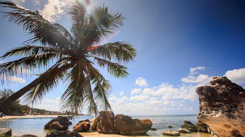 Wind Shakes Palm Branches Bent over Rocky Beach Against Sea Sky Footage