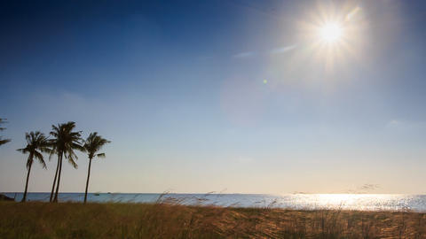 Sun In Sky Over Sea Sunlight Reflection Palms Grass On Beach stock footage