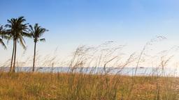Windy Thin High Grass Palms On Beach Blue Sky Azure Sea stock footage
