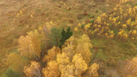 Beautiful aerial view of autumn colored forests and fields Footage