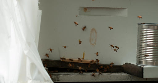 Bees Fly Around White Wall Slo-Mo Footage