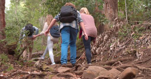 Low angle rear view of family walking through forest Footage