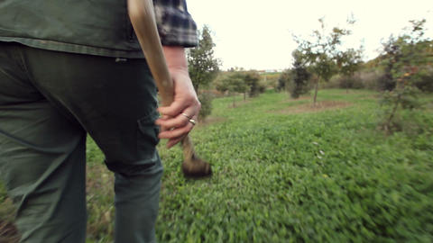 Truffle hunter walking with digging tool in hand Footage