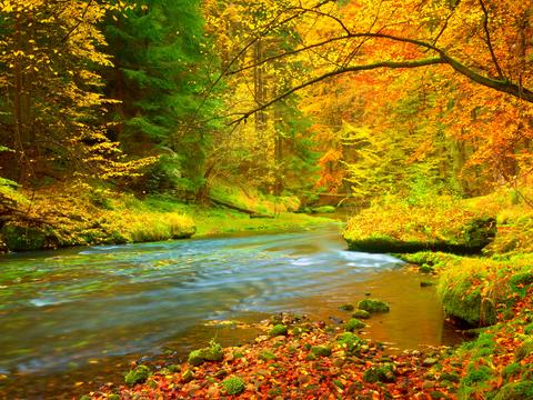 Autumn landscape, colorful leaves on trees, morning at river after rain Photo
