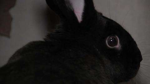 Black bunny Footage