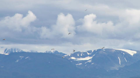 Gulls flying by beautiful mountain range Footage