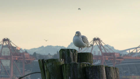 Seagull relaxing on pier post Footage