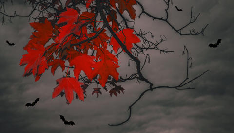 Bloody leaves and bats フォト