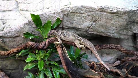 Lizard sitting on a tree Footage