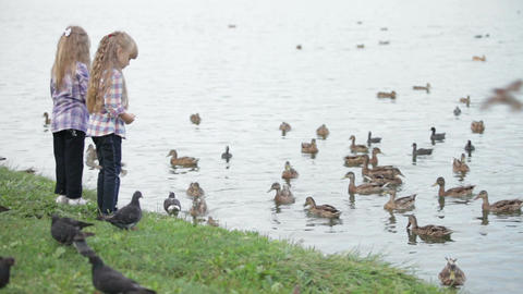 Two pretty little girls at park feeding ducks Footage