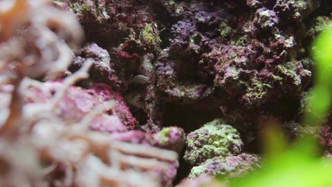 Sea reef Footage