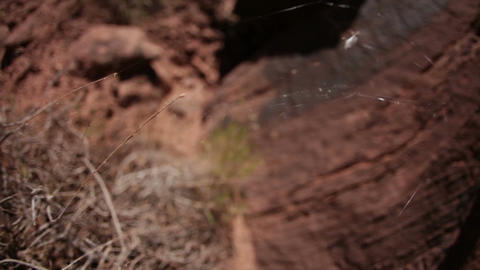 Small desert spider web blowing in breeze Live Action