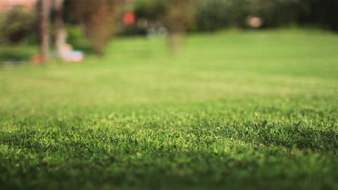 Green grass with a defocus Stock Video Footage