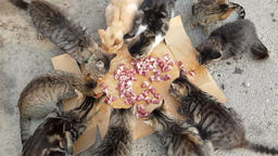 several homeless cats eats cats food Live Action
