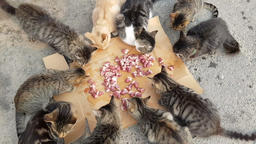 several homeless cats eats cats food Stock Video Footage