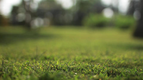 Close-up shot of green grass. Bokeh on background Stock Video Footage