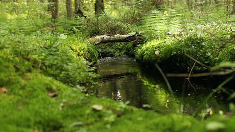 creek among lush greenery in the impassable forest Footage
