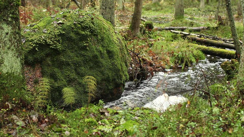 winding forest stream wild nature Footage