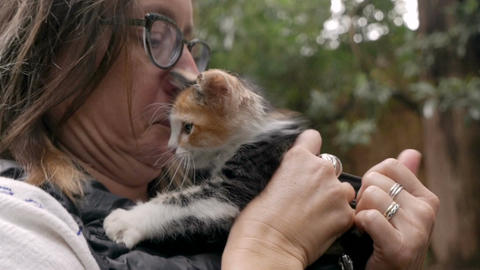 A woman puts a small cute calico kitten inside her down vest coat in slow motion Footage