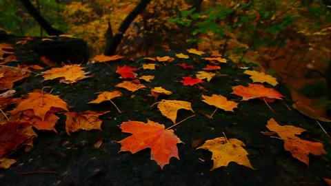 Beautiful Autumn Illinois Landscape Footage