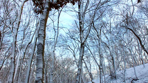 Snowy Forest Scenery Illinois Footage