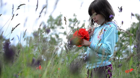 Girl sitting in a field with red poppies and gathers a bouquet for her mother 98 Footage
