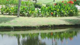 Landscape of tropical resort Footage