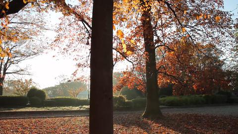 Fallen Leaves / Autumn Colors / Morning Sun / Backlight - Tilt Up/Fix 画像