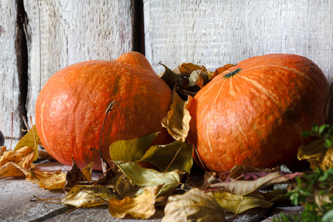 composition with pumpkins and autumn leaves, closeup, horizontal Foto