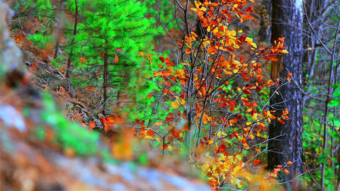 autumn forest Stock Video Footage