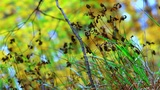 autumn forest Footage