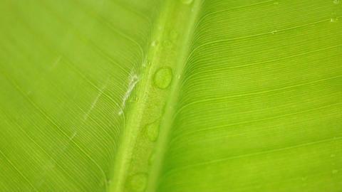 Banana Leaf Stock Video Footage
