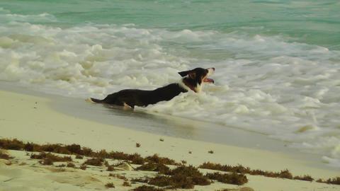 Dog Refreshing Stock Video Footage