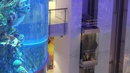 Aquarium And Passenger Lift stock footage
