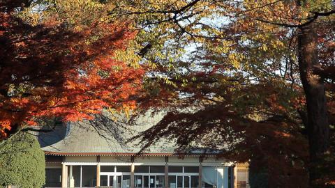 Autumn Leaves / Fall Colors / Park - Fix ビデオ