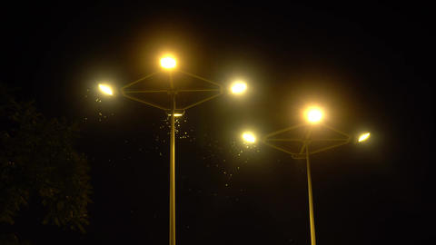Moth Flying Around Streetlamps at Night Footage