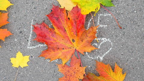 Written LOVE word on asphalt covered by falling colourful maple leaves Live Action