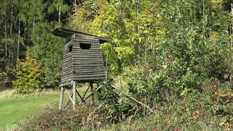 Wooden lookout tower for hunting in the woods Live Action