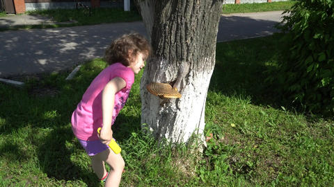 Yellow mushrooms growing on the tree. The parasitic fungus. The girl sees a Filmmaterial