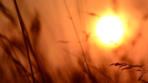 Grass at sunset Footage