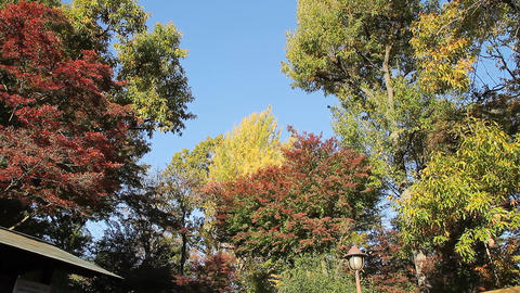 "Blue Sky / Autumn Park. Translation: ""Yokuonkan Park, Koganei-shi"" - Tilt Live Action"