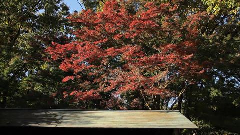 Autumn Leaves / Fall Colors / Roof - Fix ビデオ