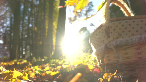 Falling yellow leaves against shining sun and basket. Sunny autumn day. Super Footage