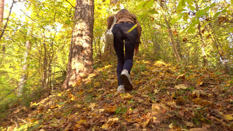 Brunette girl in brown jacket hiking in sunny autumn woods. Climbing uphill. 4K Footage