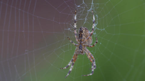 Great Beautiful Spider Archivo