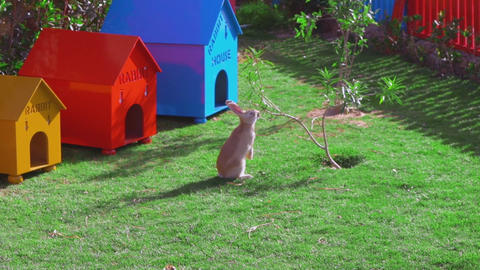 A yellow rabbit is sitting near a small tree, eating leaves Footage