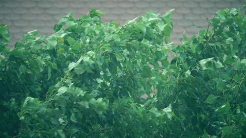 Bending tree in heavy rainstorm Footage