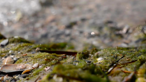 The waves of the sea and the beach from seaweed and shells. Foam of sea water. Footage